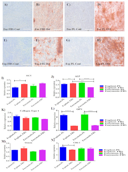 Evaluation of osteogenic differentiation potential of the isolated PDLSCs.