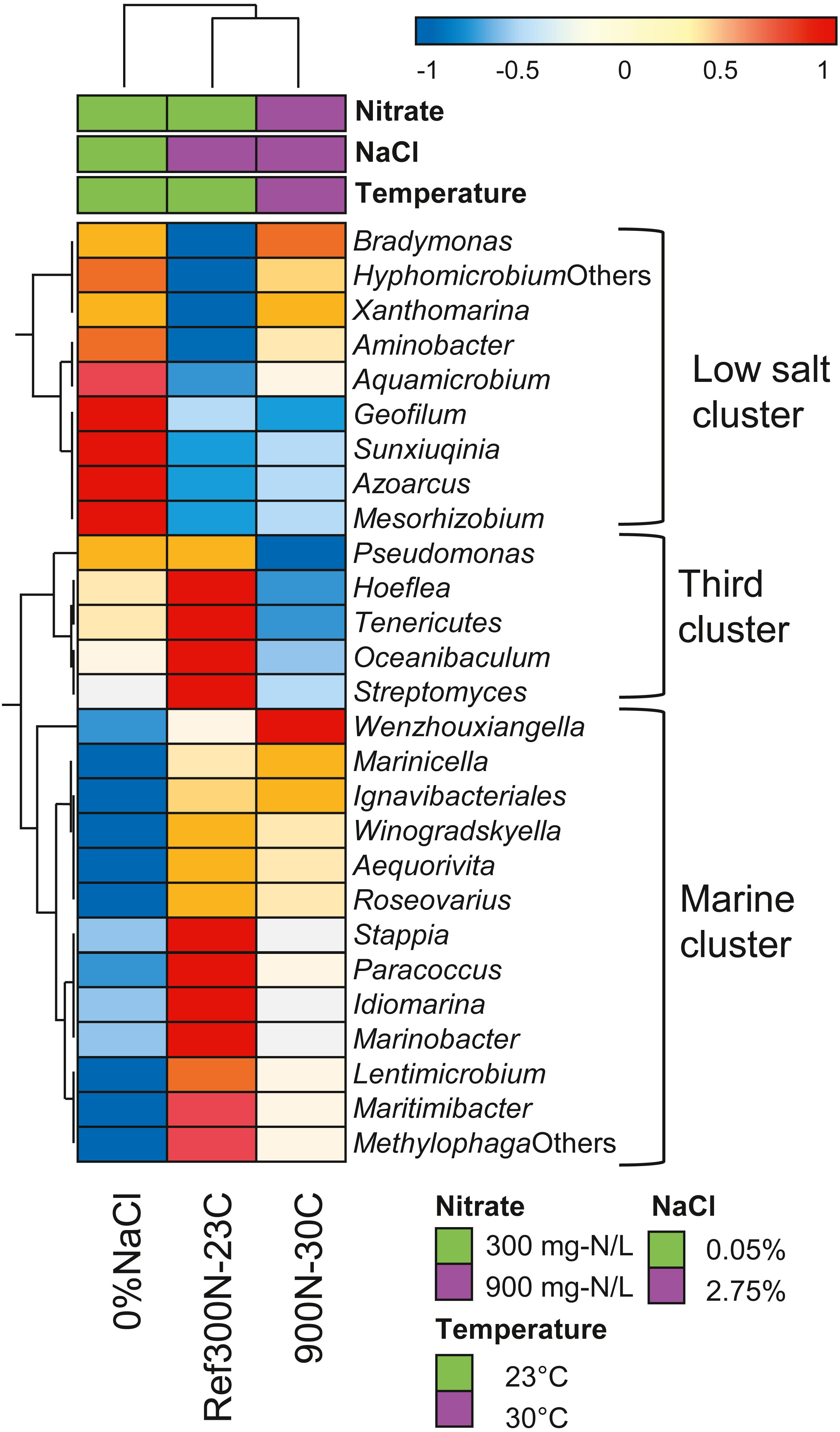 Dynamics of a methanol-fed marine denitrifying biofilm: 2