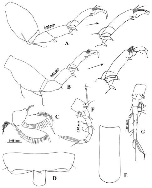 Hargeria rapax, topotype specimens.