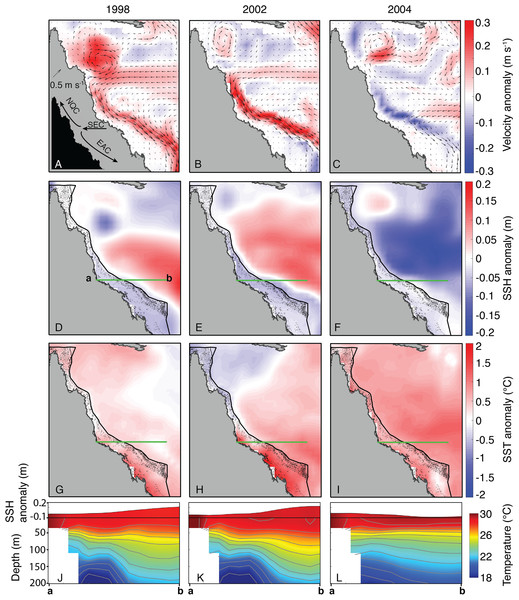 Sea surface currents, height, and temperature anomalies for January, February, and March of bleaching years (1998, 2002, 2004) included in SODA.