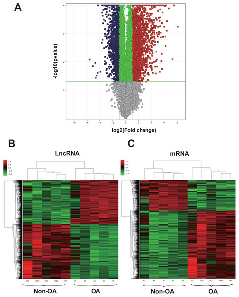 Volcano plot and hierarchical clustering of lncRNA and mRNA differential expression profiles between non-OA and OA groups for 10 cartilage tissues.