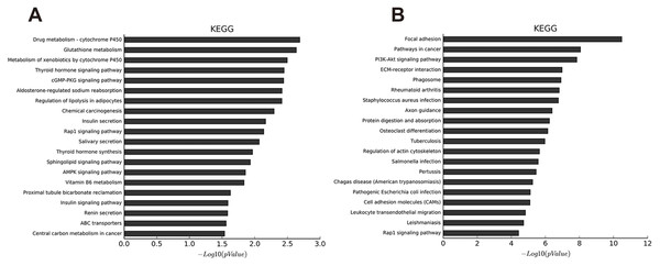 KEGG pathway analysis of abnormal mRNAs between OA and non-OA groups.