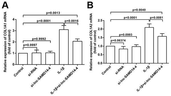 Effects of lnc-SAMD14-4 suppression on the relative expression levels of COL1A1 (A), COL1A2 (B) in IL-1 β-treated human primary chondrocytes detected by QPCR.