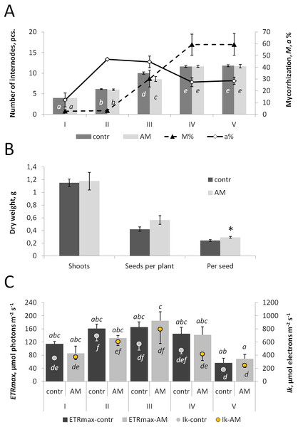 The effect of inoculation with R. irregularis on plant growth and leaf photochemical activity of the pea cv. Finale at different stages of plant development.