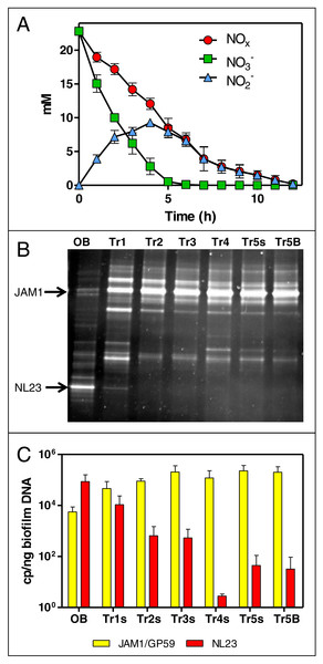Dynamics of NO                                                  ${}_{3}^{-}$                                                                                                                                                     3                                                                                                −                                                                                                           and NO                                                  ${}_{2}^{-}$                                                                                                                                                     2                                                                                                −                                                                                                           concentrations and of the bacterial community in the Ref300N-23C biofilm cultures.