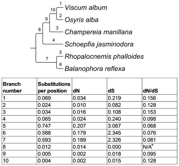 Evolutionary parameters of the phylogeny of Santalales.