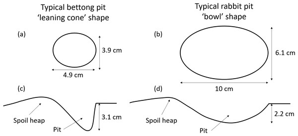 Bettong and rabbit pit dimensions.