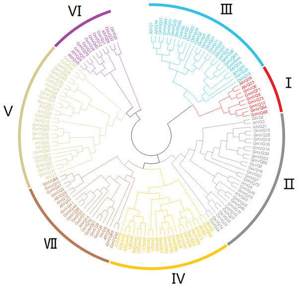 Phylogenetic tree analysis of the VQ genes in Glycine max, Arabidopsis thaliana and Oryza sativa.