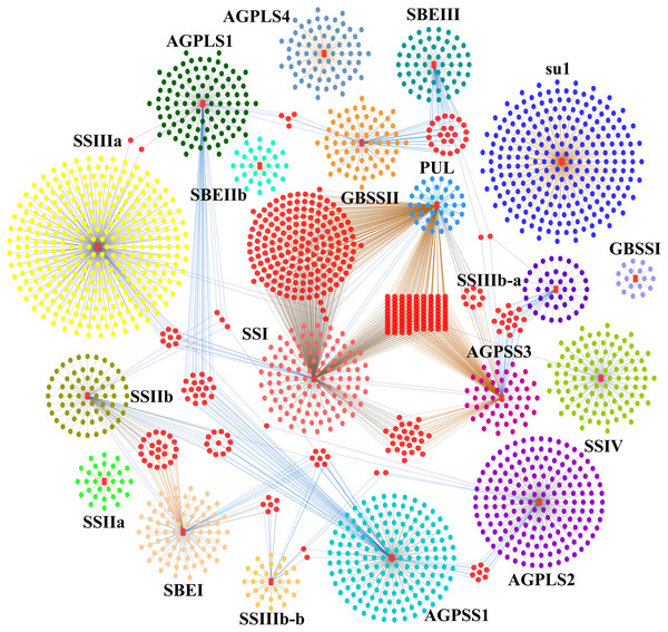 Starch biosynthesis community networks.