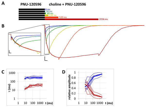 Currents evoked by different lengths of agonist and PNU-120596 coapplication after 1 s preincubation by PNU-120596.