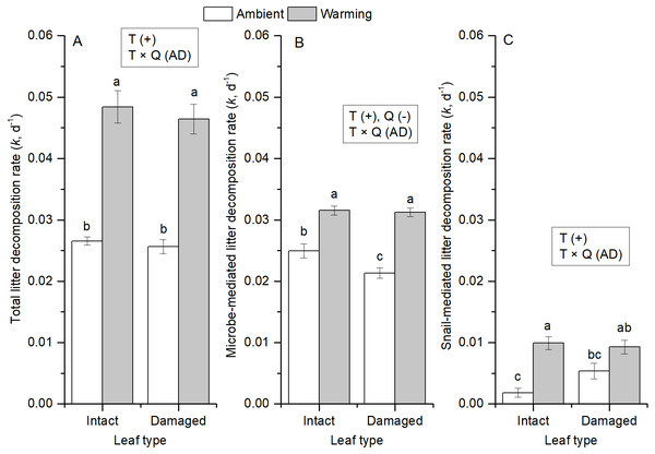 Averages of litter decomposition rates of (A) total, (B) microbes, and (C) snails for intact and insect-damaged leaf litter at ambient and warming (∼8 °C higher) conditions.