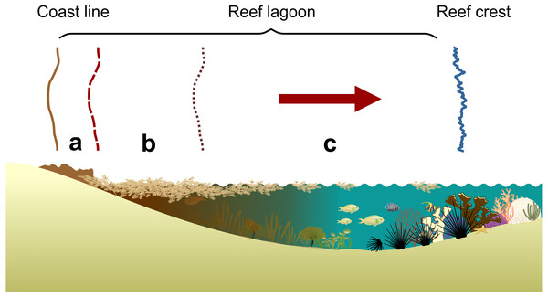 Lagoon reef-scape showing the sections with Sargassum blooms.