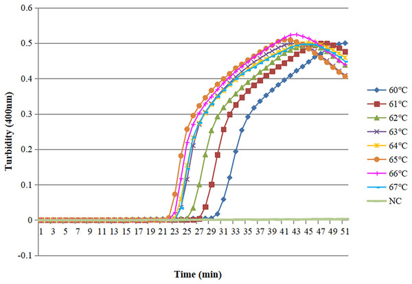 Different temperatures of the LAMP reaction for detection of O. sinensis.