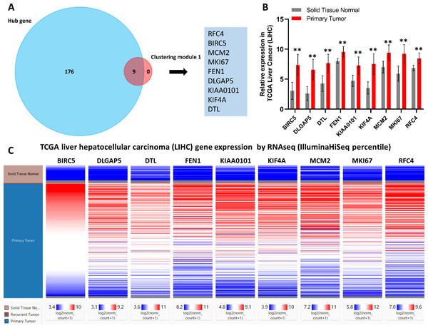 Identification of nine core HCC-associated genes.
