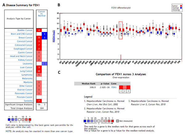 The expression of FEN1 in cancers including HCC.