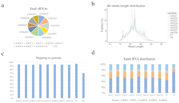 Small RNA sequencing-quality analysis and length distribution.