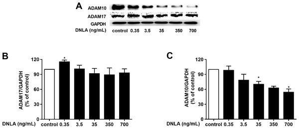 DNLA reduced the accumulation of Aβ through non-amyloidogenic pathways.