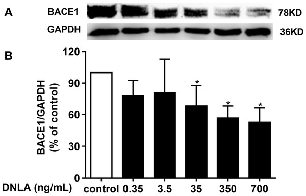 DNLA reduced the production of Aβ through amyloidogenic pathways.