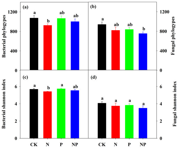 Bacterial and fungal phylotype richness (A) and (B) and Shannon diversity index (C) and (D) under different treatments.