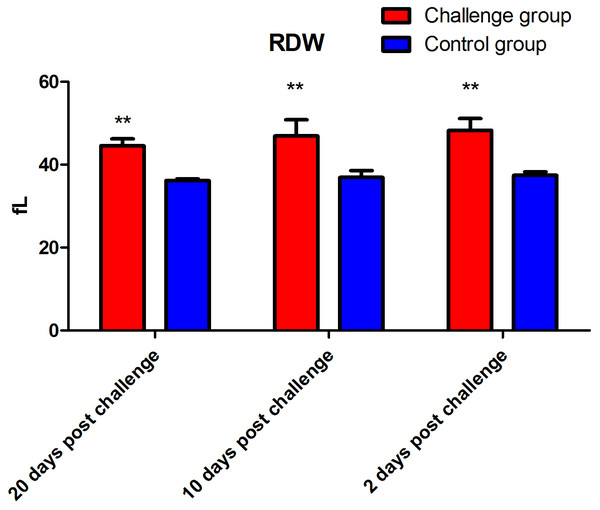 Red blood cell distribution width (RDW) after fungal challenge.