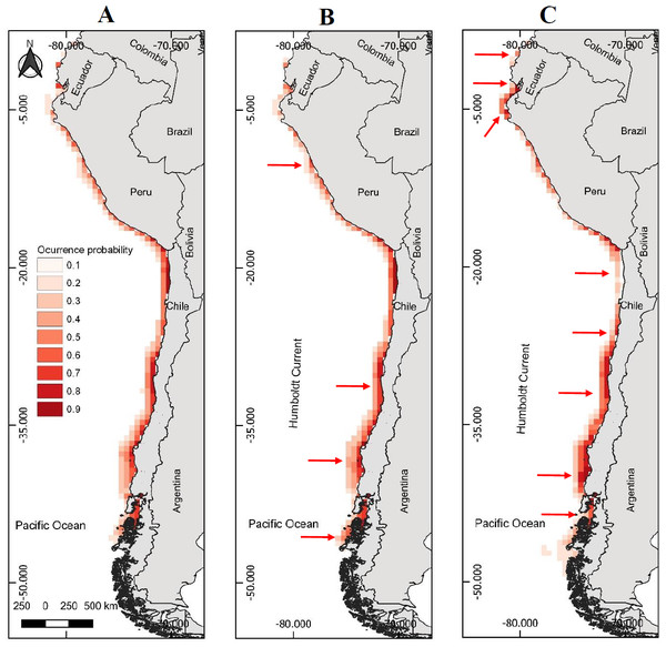Models of potential geographic distribution of the Peruvian pelican (P. thagus) based on climatic variables and projected for 2010 according to two climate change scenarios.
