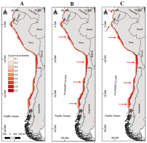 Models of potential reproductive distribution of the Peruvian pelican (P. thagus) based on climatic variables and projected for 2010 according to two climate change scenarios.
