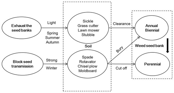 Strategy framework for weed management in a fallow field in Northern China.