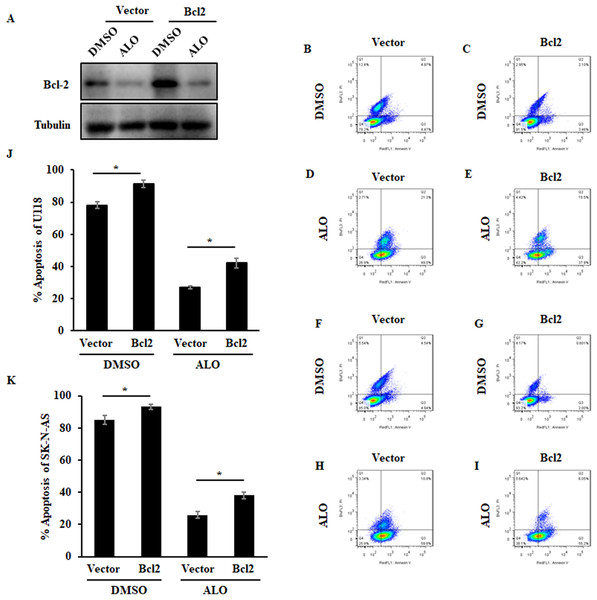 Identification of Aloperine as an anti-apoptotic Bcl2