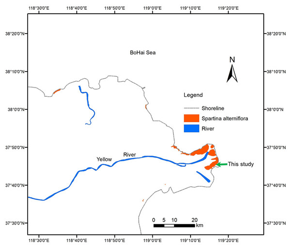 Distribution of Spartina alterniflora in the Yellow River Delta of China.