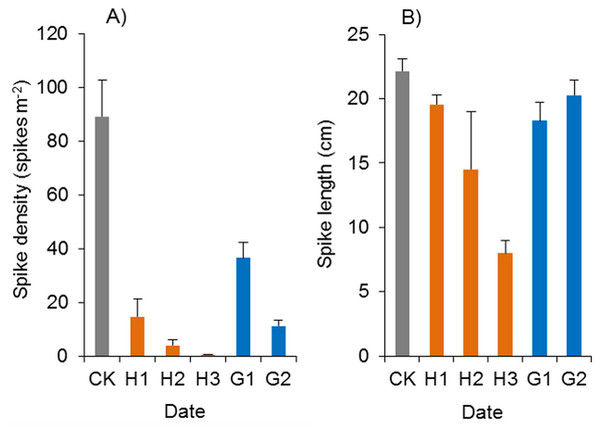 Effects of haloxyfop-r-methyl on the spikes of Spartina alterniflora.