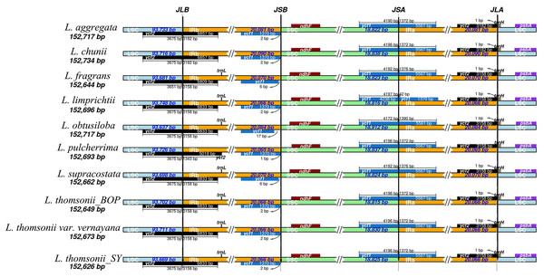 Comparison of the borders of the LSC, SSC, and IR regions among 10 Lindera plastid genome sequences.