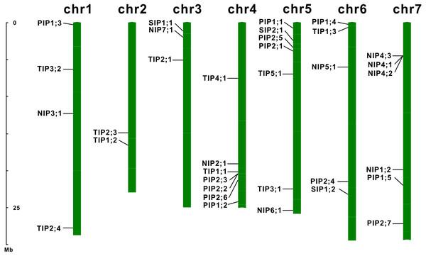Chromosomal localization of the EsAQP genes.