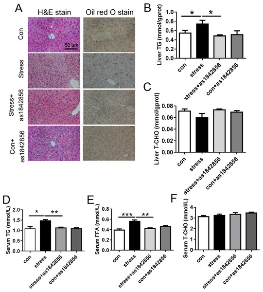 As1842856 protect mice against stress-induced liver lipid deposition.