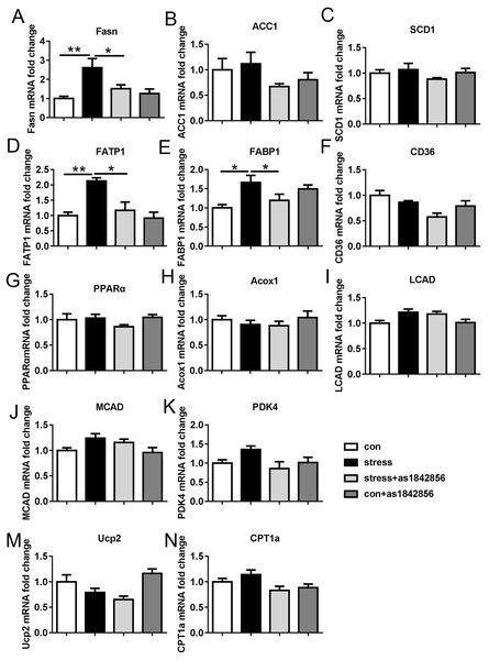 Effects of stress and as1842856 on liver lipid metabolism genes in mice after 6 weeks.