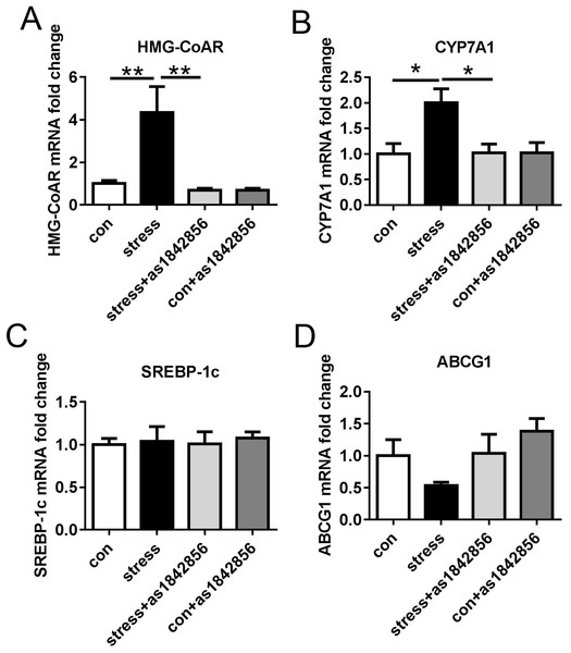 Effects of stress and as1842856 on cholesterol metabolism-related genes in mice after 6 weeks.