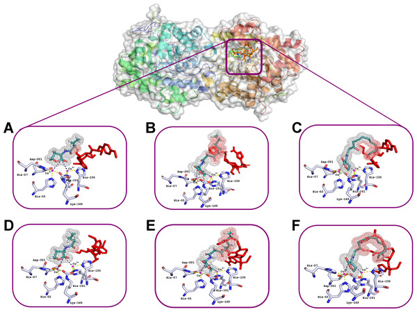 Results of computationally simulated interactions of AHLs with the active site of His6-OPH in the presence of puromycin (shown as red sticks).