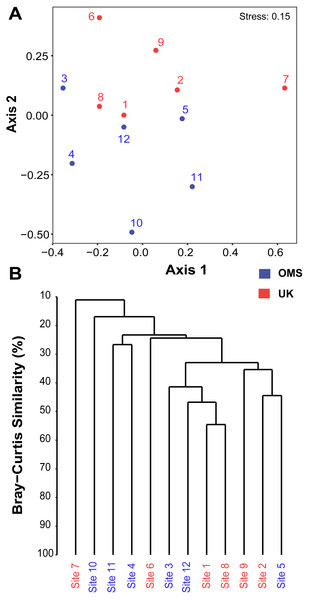 Spatial patchiness and structure of the meroplankton assemblage captured by metabarcoding across 12 abyssal sites.