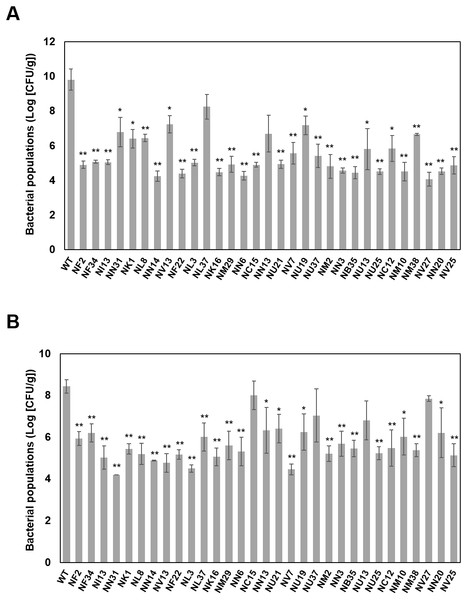 Bacterial population dynamics in cabbage (A) and in oat (B) inoculated with bacterial suspensions of wild-type Pcal KB211 and mutants containing 0.025% Silwet L-77 at a concentration of 5 ×107 CFU/ml.