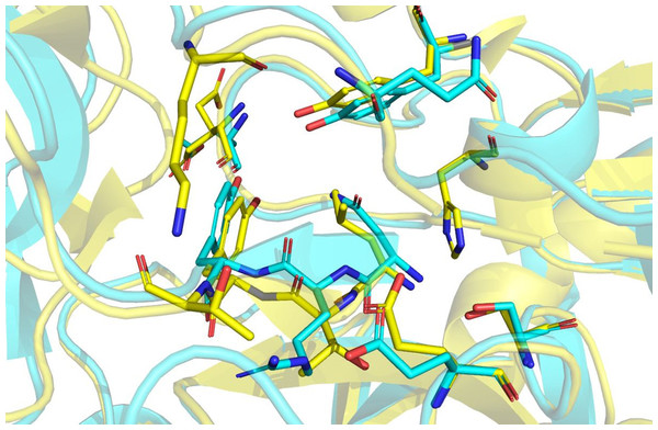 Structural alignment of Hir-thrombin (cyan) and the variant-1 hirudin crystal structure (PDB ID: 2PW8; yellow).