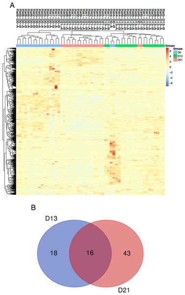 Proteomic analysis of urine samples on days 13 and 21 in rats subcutaneously inoculated with tumor cells.