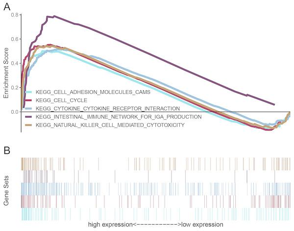 Enrichment plots from gene set enrichment analysis (GSEA).
