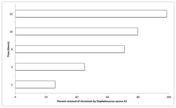Effect of contact time (hours) on chromium removal capacity of Staphylococcus aureus K1.