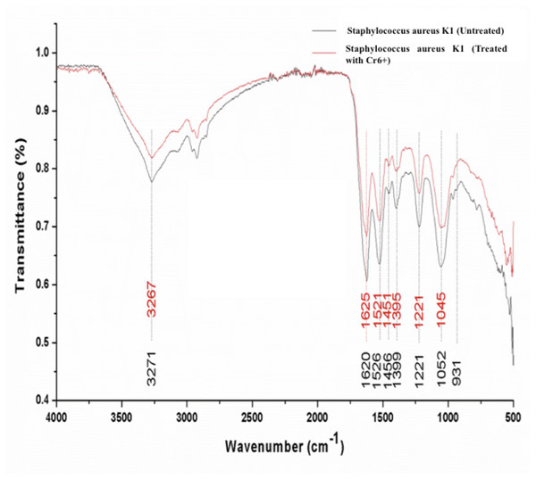 FTIR spectrum of Staphylococcus aureus strain K1 cells in the absence (untreated) and presence (treated) of Cr6+ (1 mM).