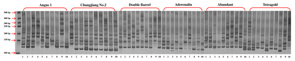 The gel electrophoresis picture of primer LMgSSR00-04A for PCR amplification among 10 bulks for six annual ryegrass cultivars.