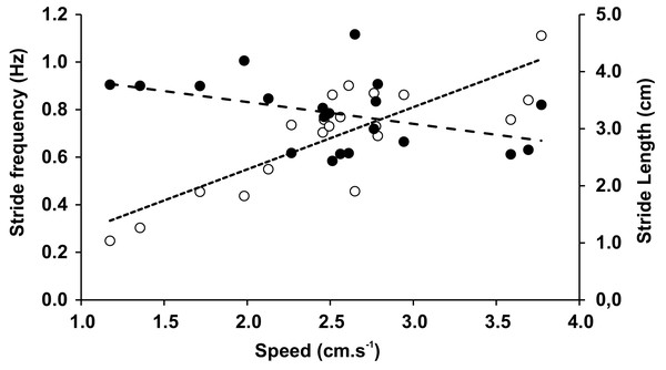 Stride frequency (open circles) and stride length (full circles) on function of speed.