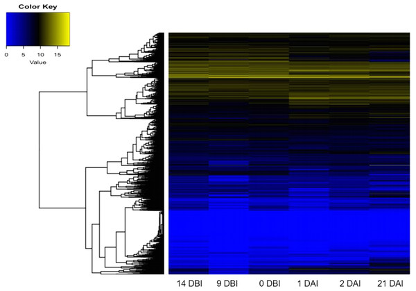 Expression profile of genes of C. canephora.