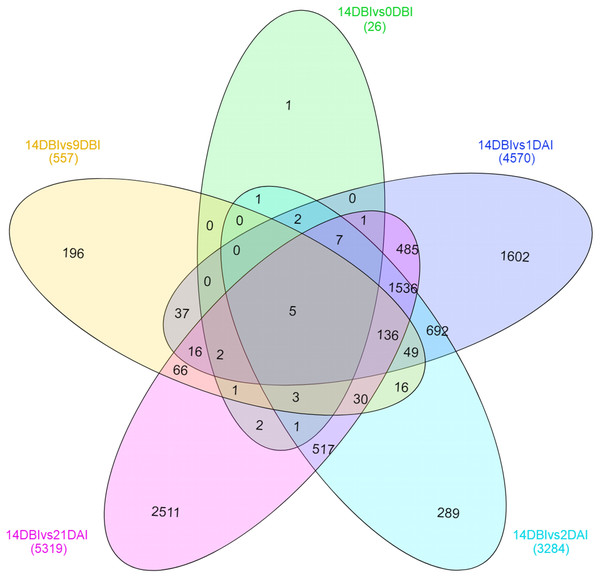 Venn diagram of differentially expressed genes between each comparison.