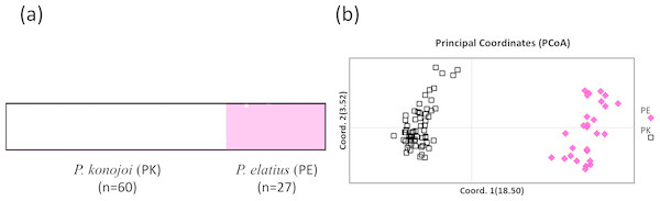 STRUCTURE (A) and PCoA result (B).
