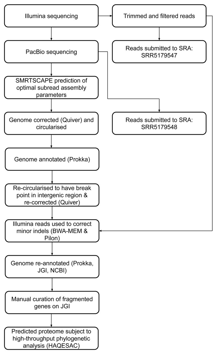 Whole Genome Sequencing Of A Novel Dichloromethane