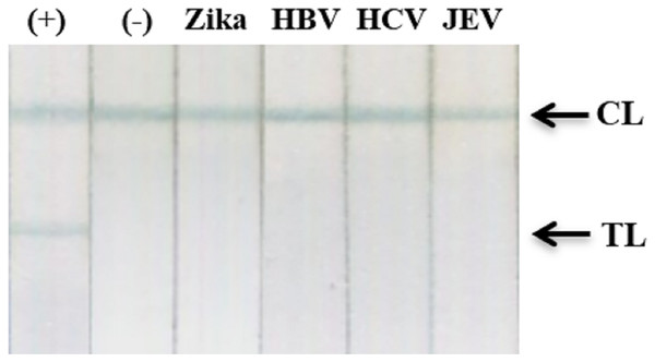 Cross-reactivity test against recombinant Zika NS1, HBV, HCV, and JEV clinical samples.